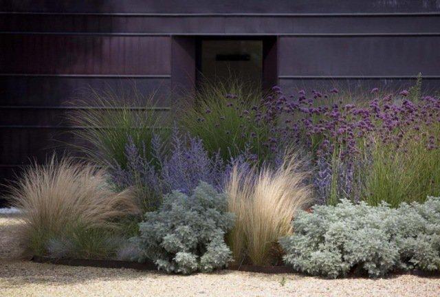 Plant a drought resistant garden